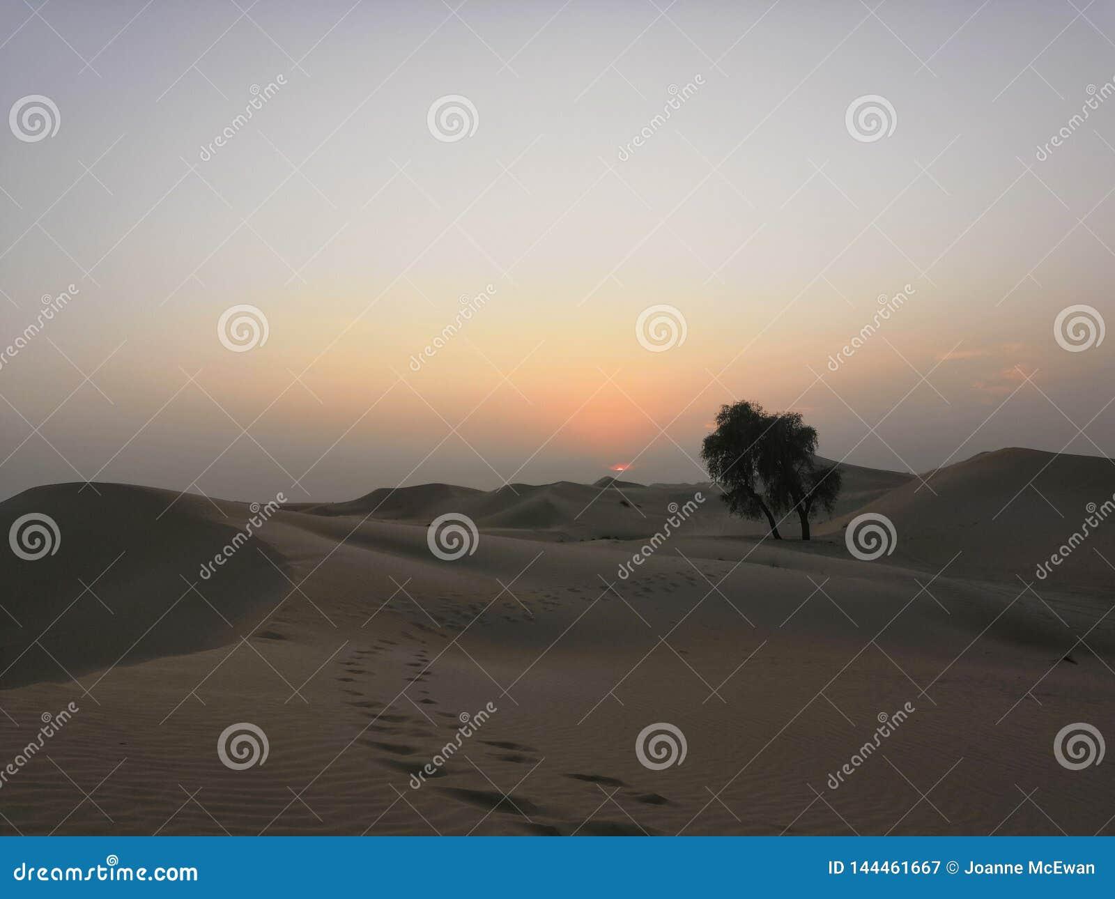 Het landschap van het zandduinen van Doubai van de woestijnzonsondergang