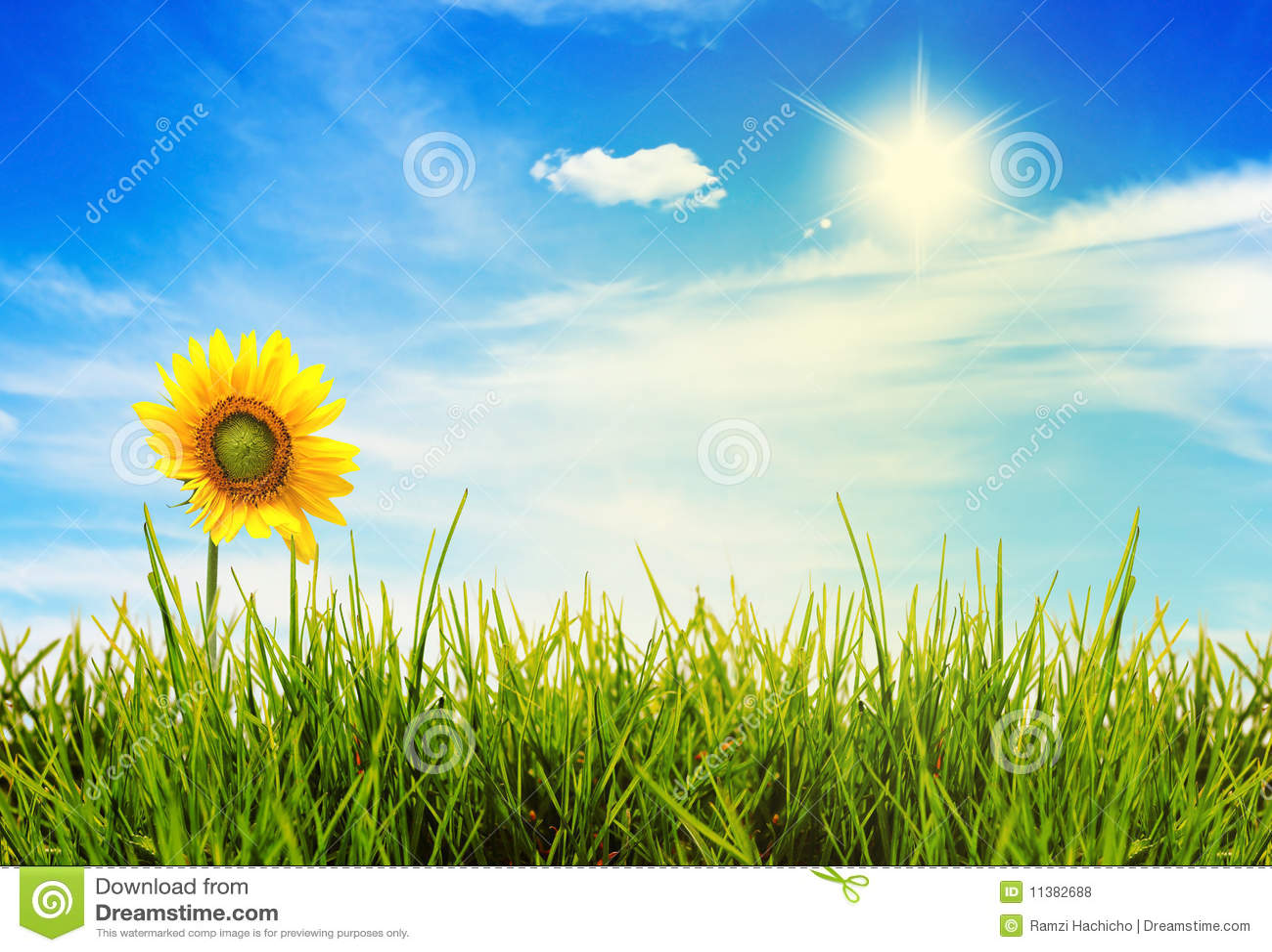 Het landschaps groene gebieden van de zomer en mooie hemel
