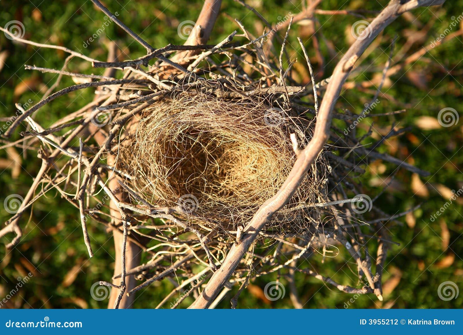 het lege nest van de vogel stock foto afbeelding bestaande uit tussenvoegsel 3955212. Black Bedroom Furniture Sets. Home Design Ideas