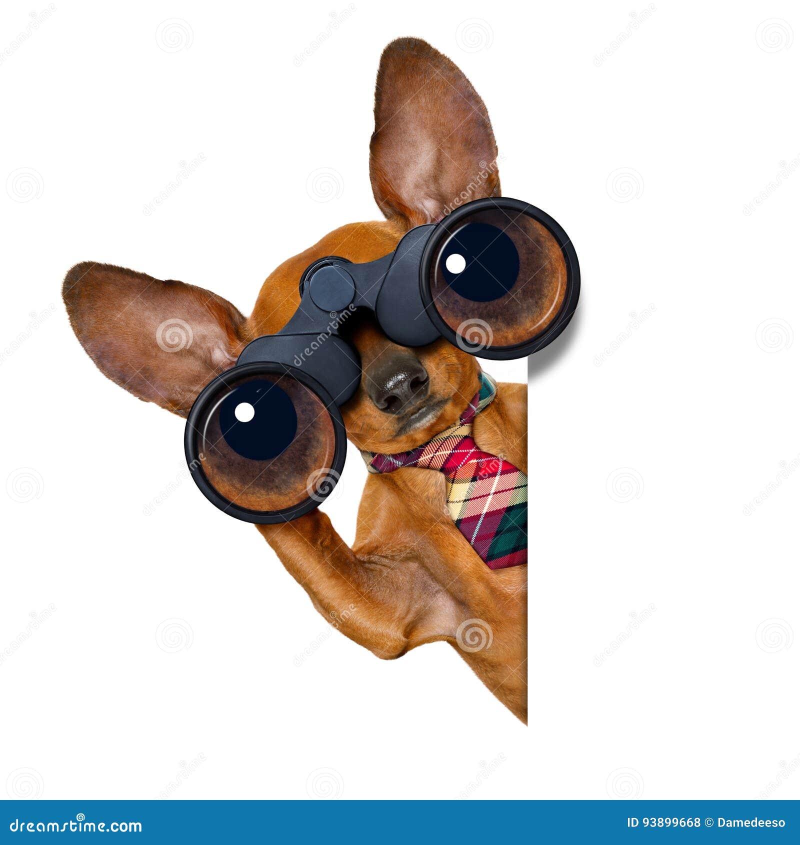 Het letten op hond met verrekijkers