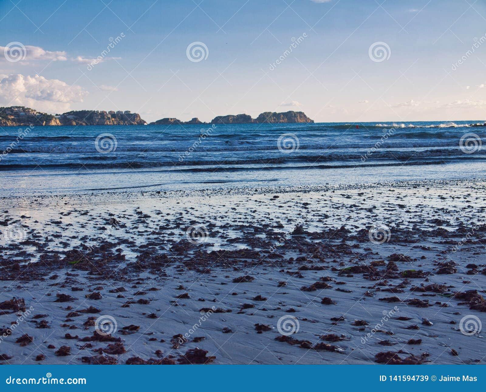 Het letten van de op malgratseilanden met één of ander zeewier op het zand