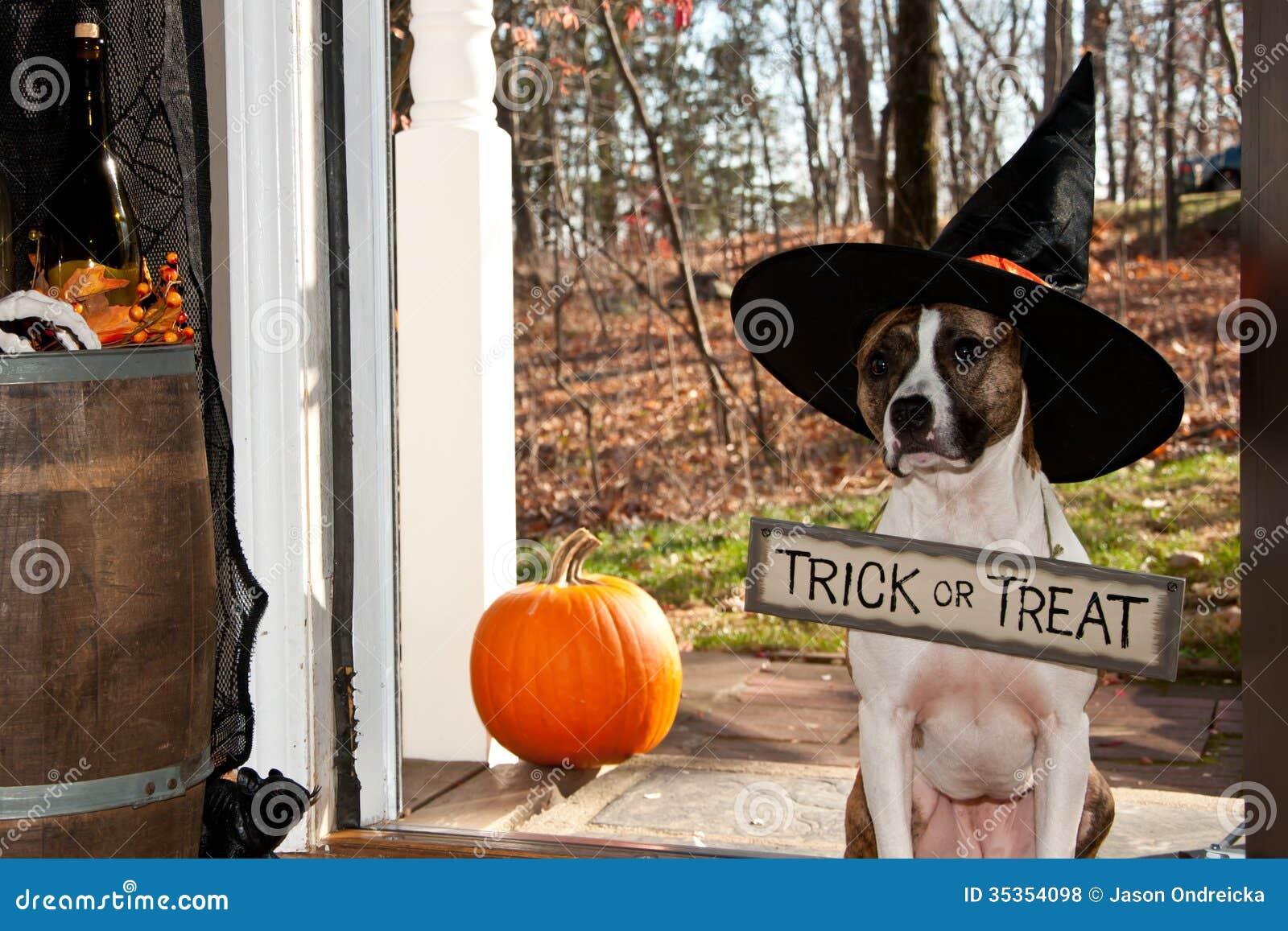 Het leuke Hond Truc of Behandelen