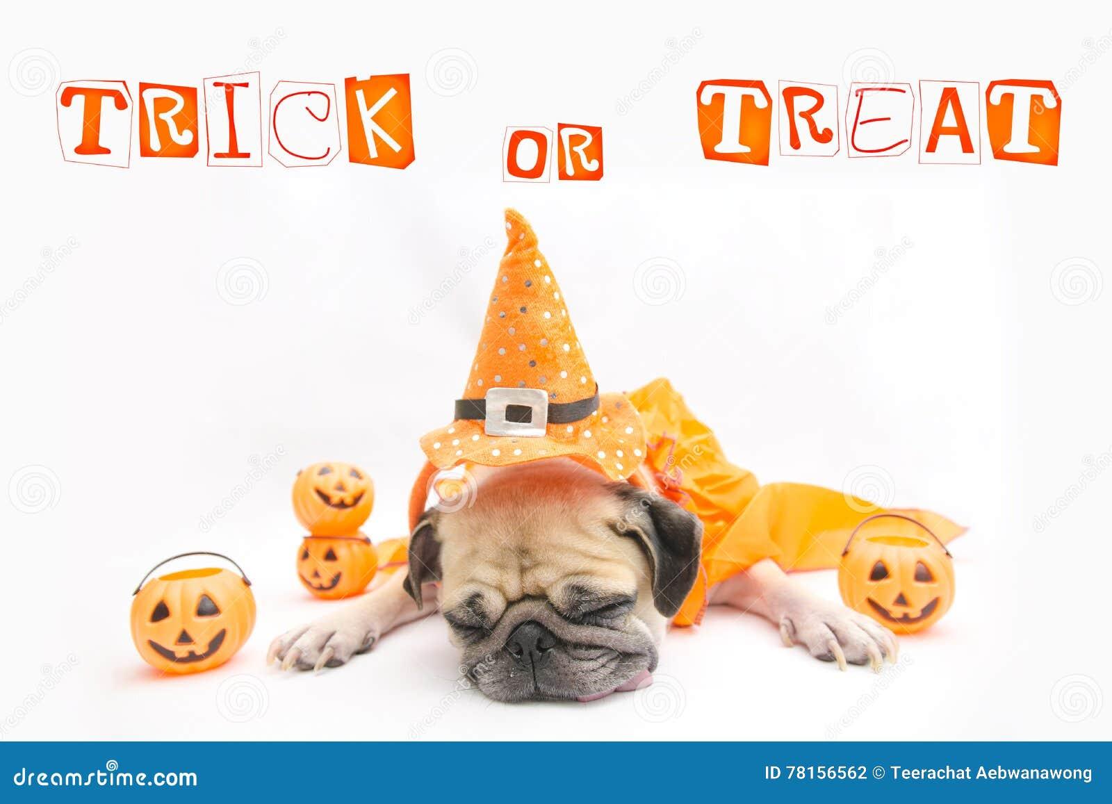 Het leuke Pug rust van de Hondslaap en tong plakken uit met de Gelukkige dag en de pompoen van Halloween