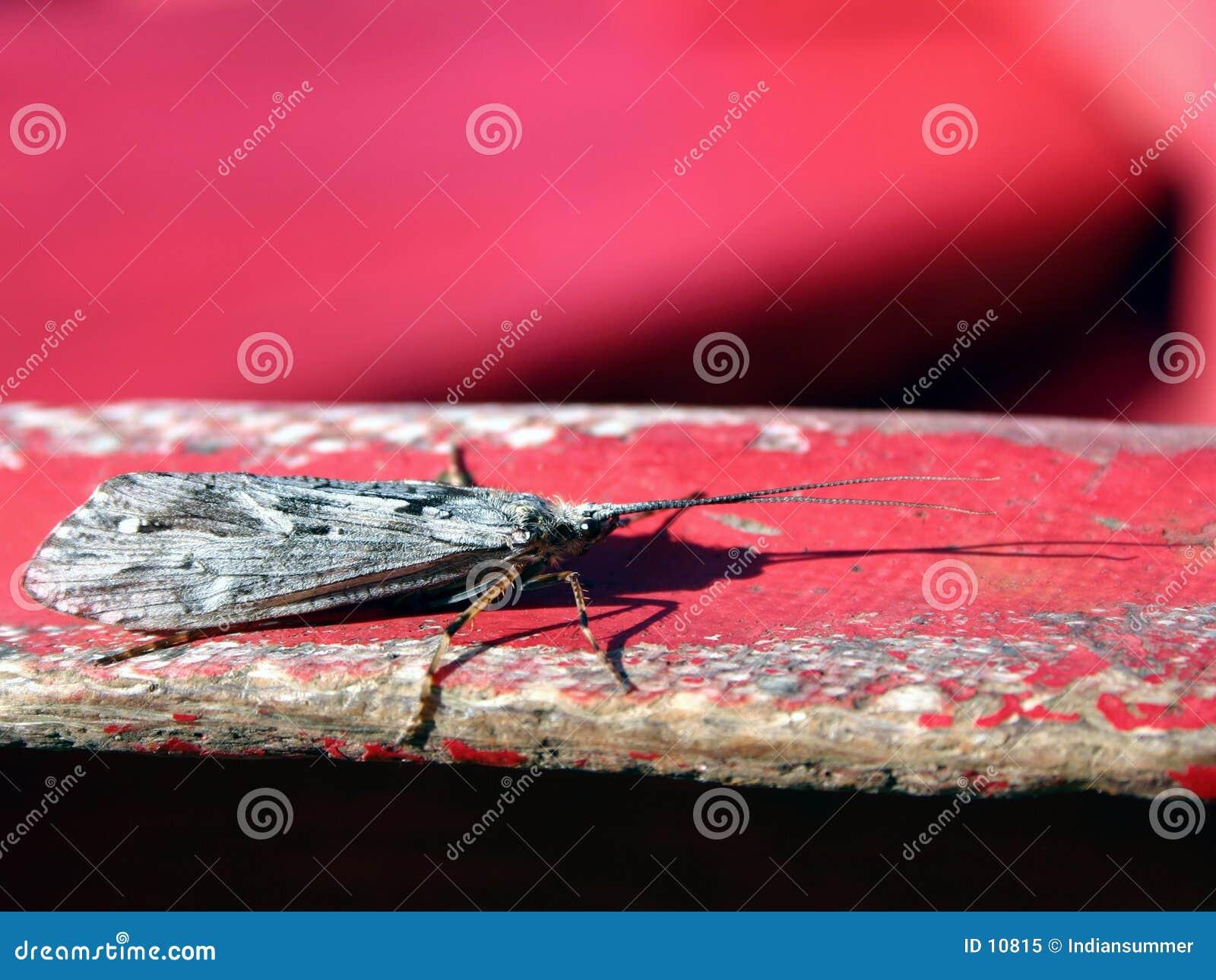 Het leven III van het insect