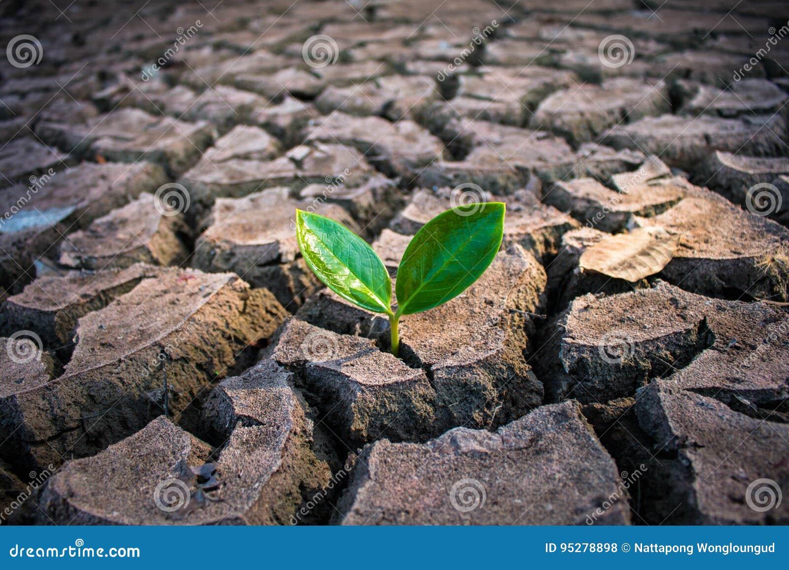 Het leven met boomdroogte