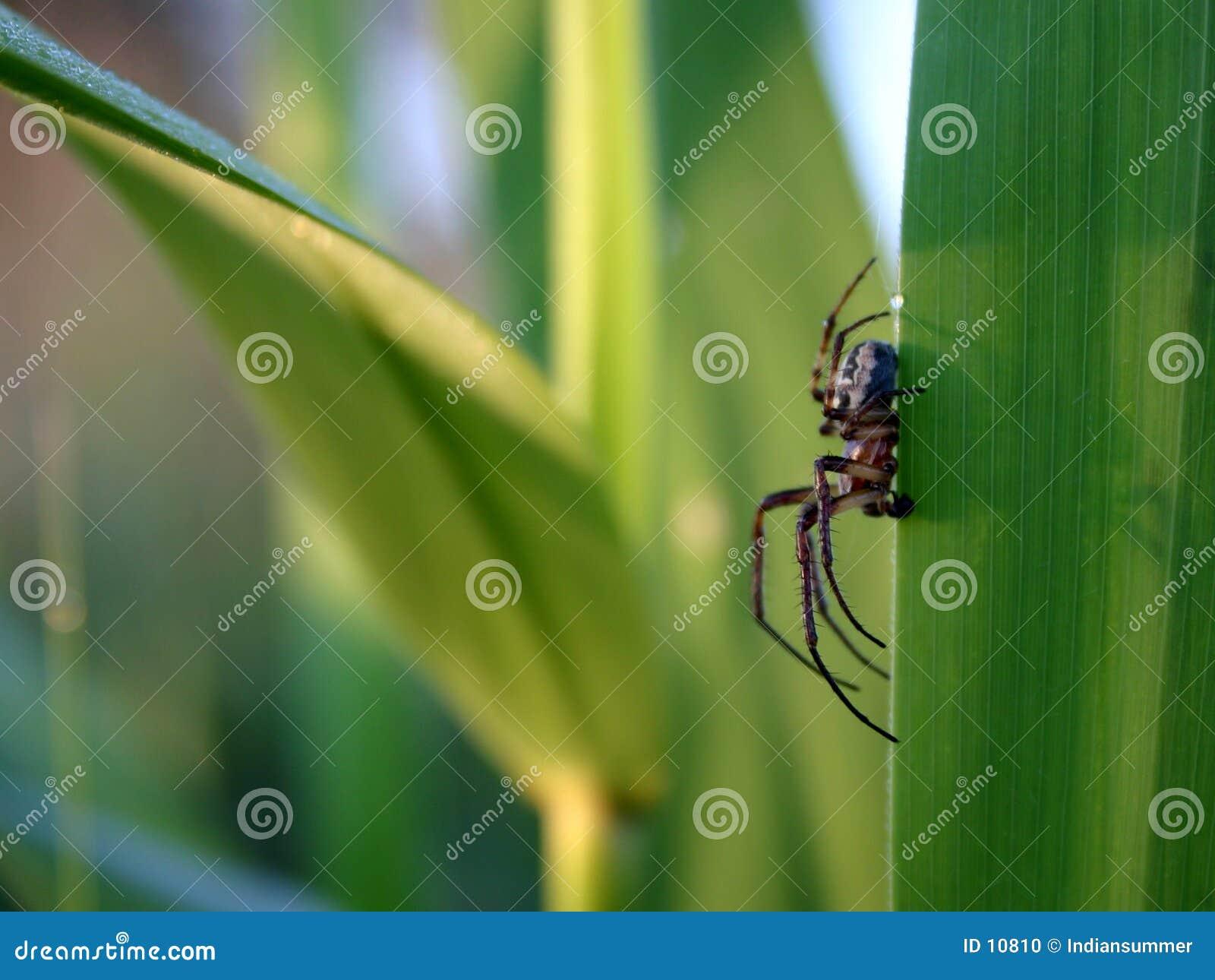 Het leven van het insect