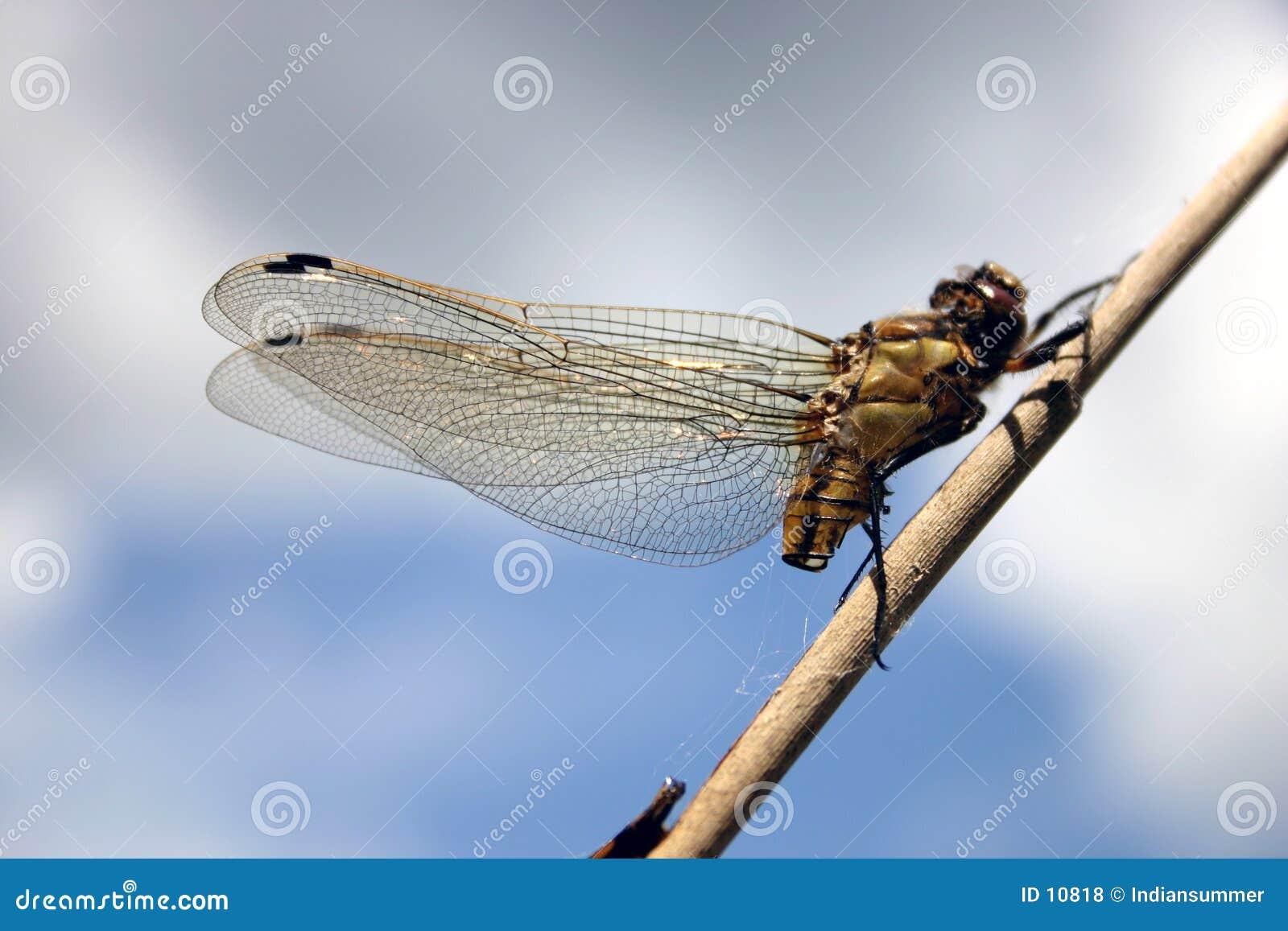 Het leven VI van het insect