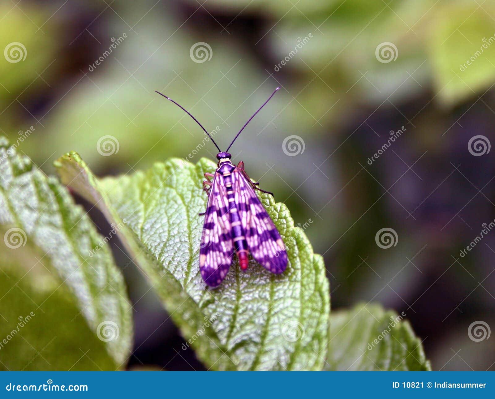 Het leven VIII van het insect