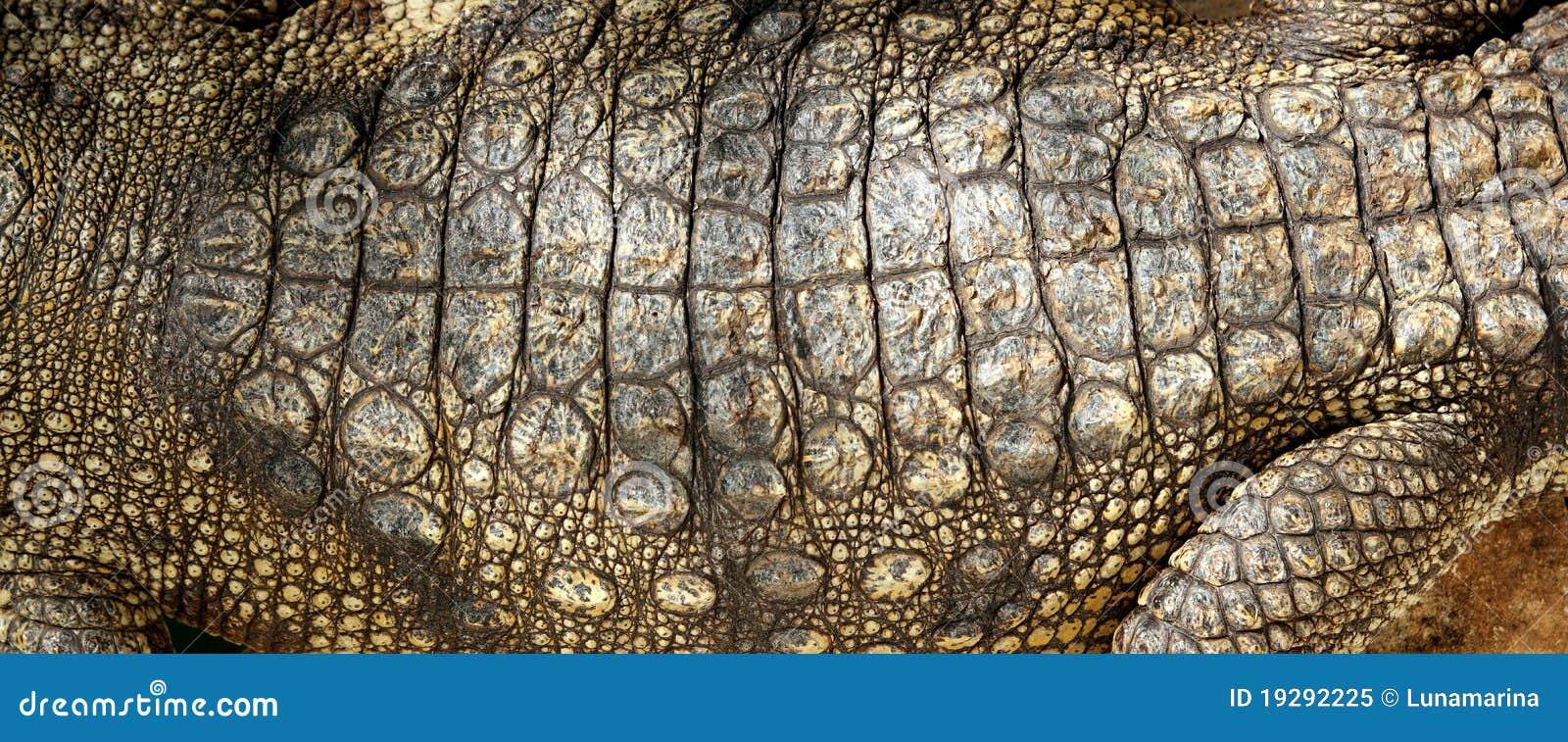 Het levende detail van de de huid macrotextuur van de krokodil echte stock afbeelding - Fotos van levende ...