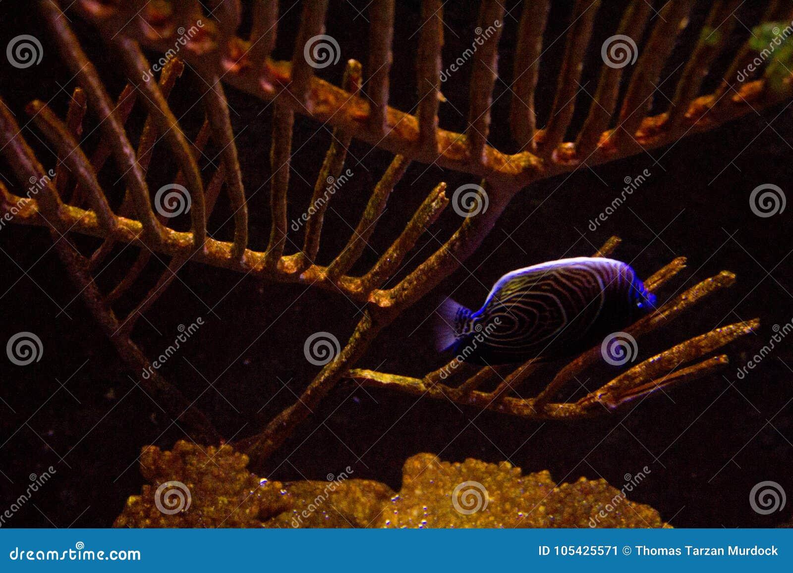 Het levendige kleurrijke aquatische leven in donker vertoningsaquarium