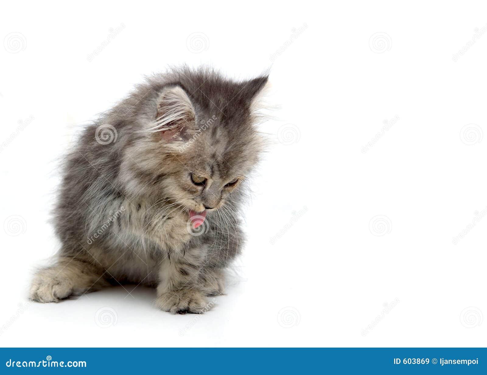 Het likken van het katje