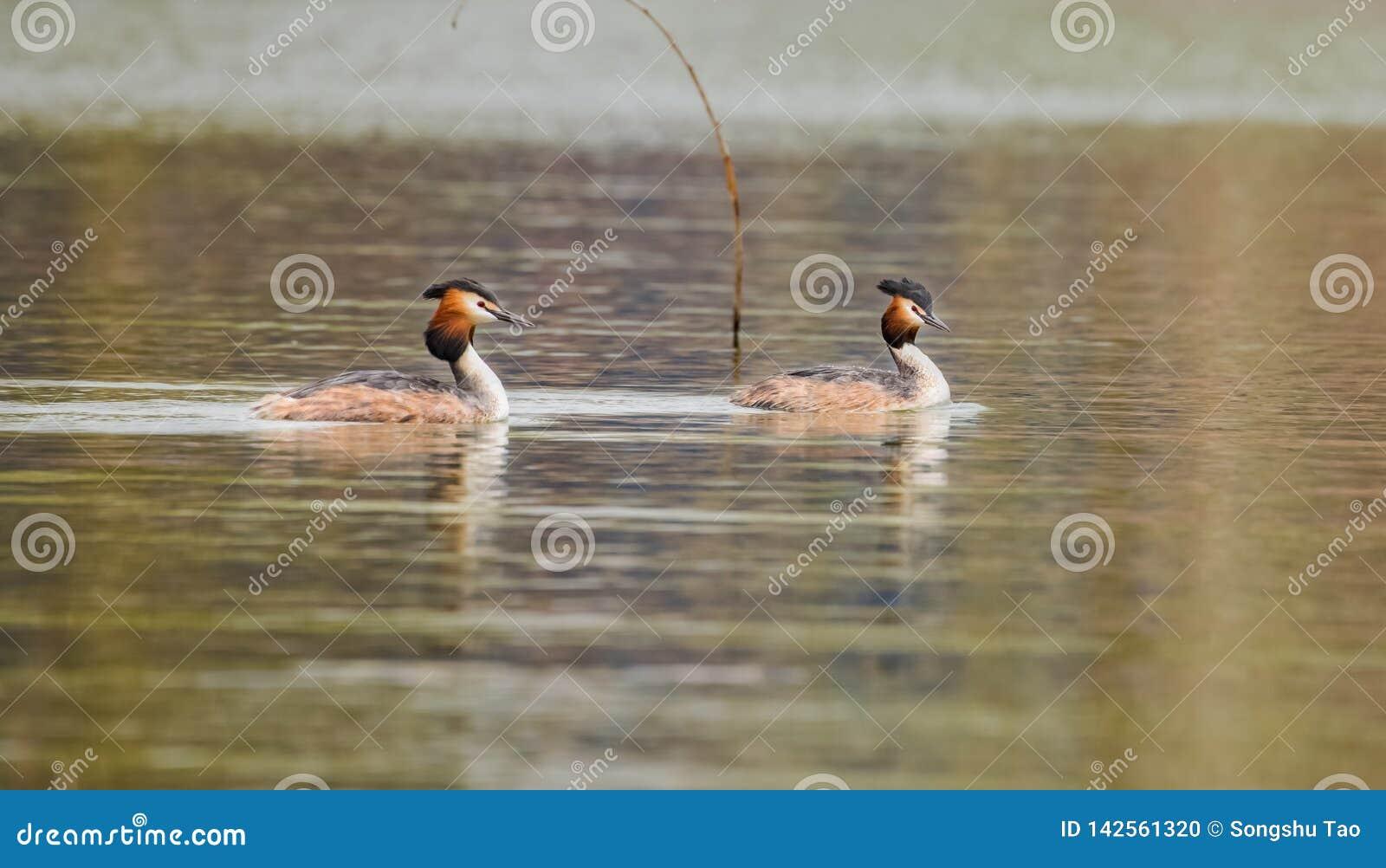 Het Loodgieterswerk Duck Prophet van de de lenterivier