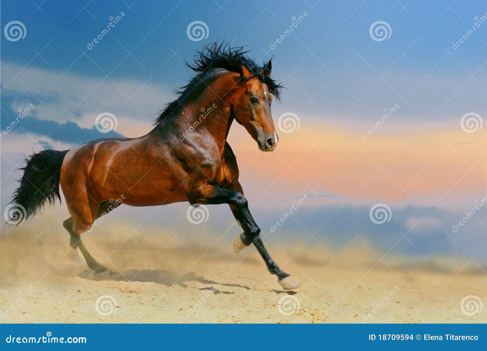 Het lopen paard in de woestijn