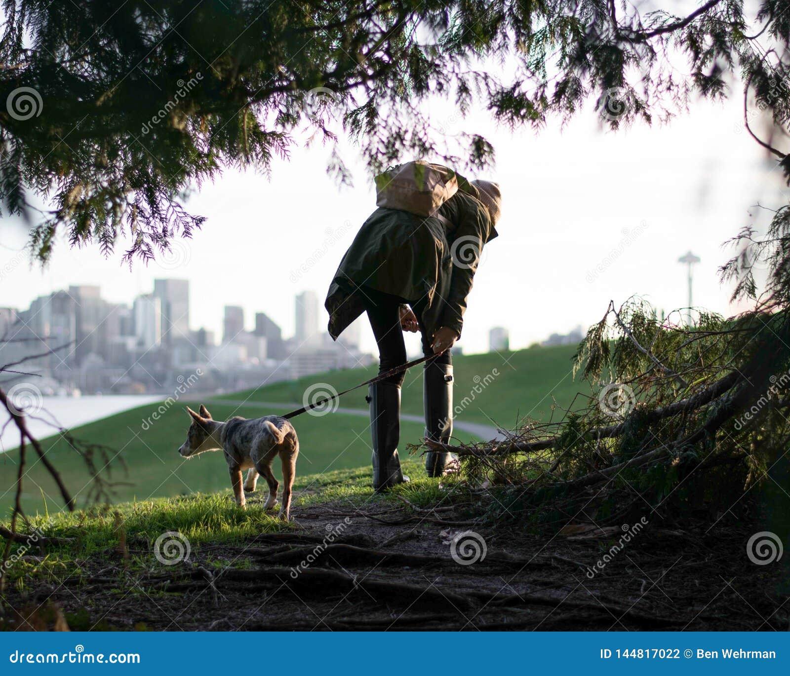 Het lopen van de hond in de stad