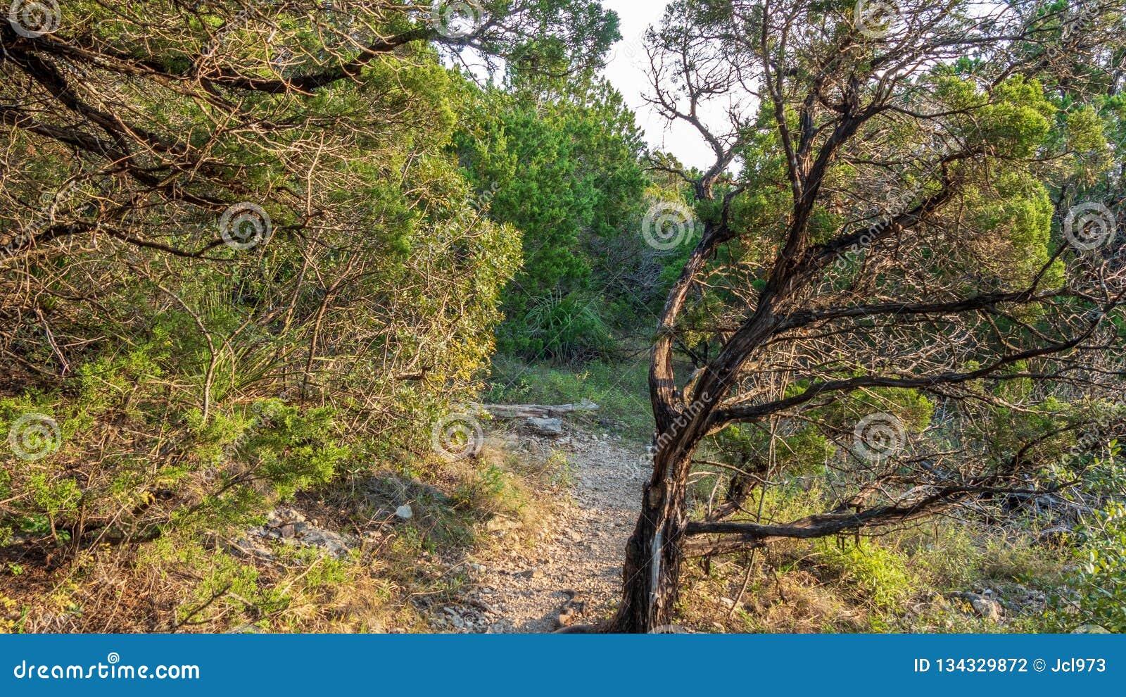 Het lopen van slepen in een stil, rustig, vreedzaam bospark met trillende groene bomen en vegetatie
