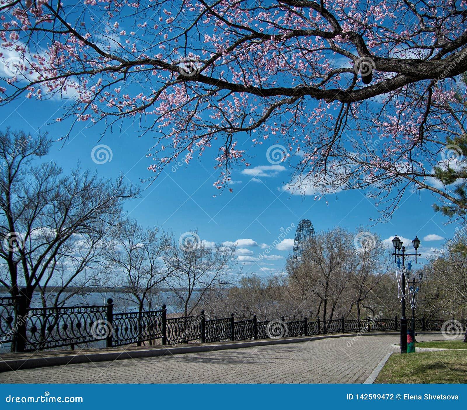 Het lopen van weg in het tot bloei komende stadspark in zonnige de lentedag Prentbriefkaar