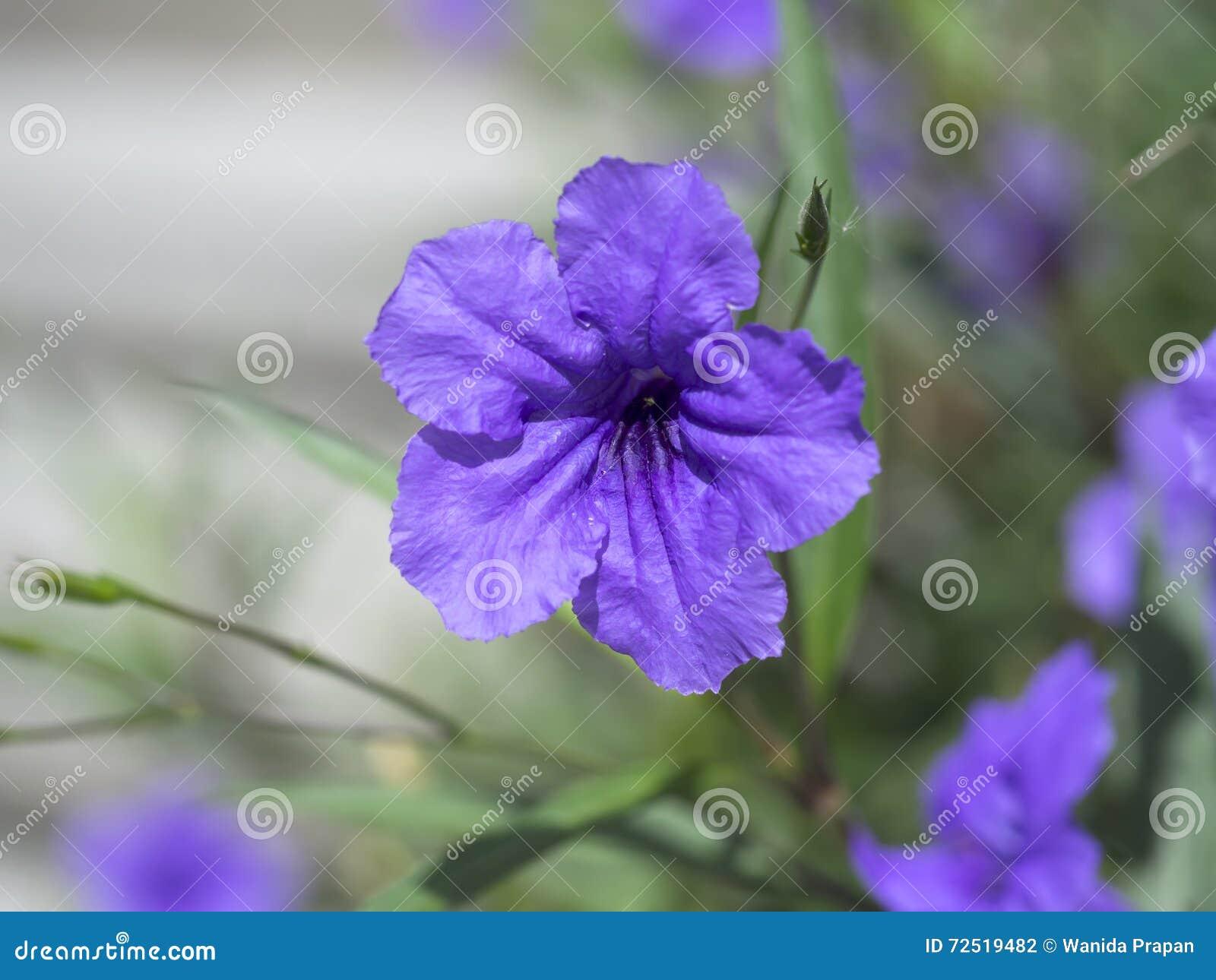Het macrobeeld van de lente lilac violette en purpere bloemen, vat zachte bloemenachtergrond samen