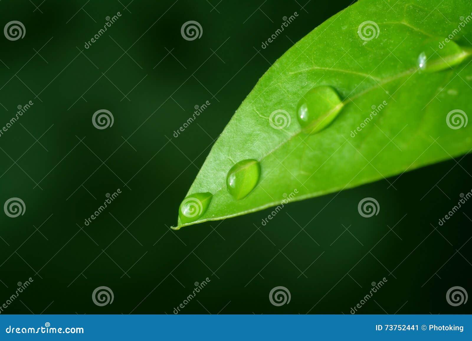 Het macroblad van de waterdaling