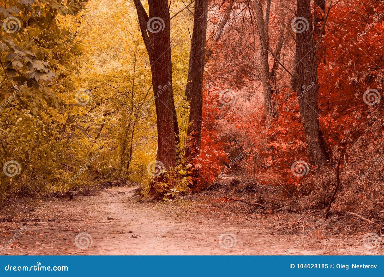 Download Het Magische De Herfstbos Is Zeer Mooi Stock Afbeelding - Afbeelding bestaande uit takken, niemand: 104628185