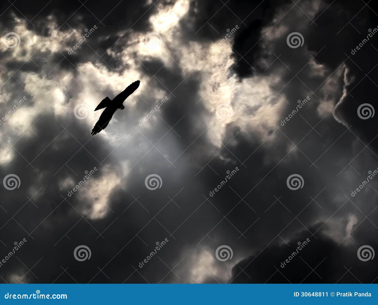 Het majestueuze vliegen van Eagle stormachtig hemelweer