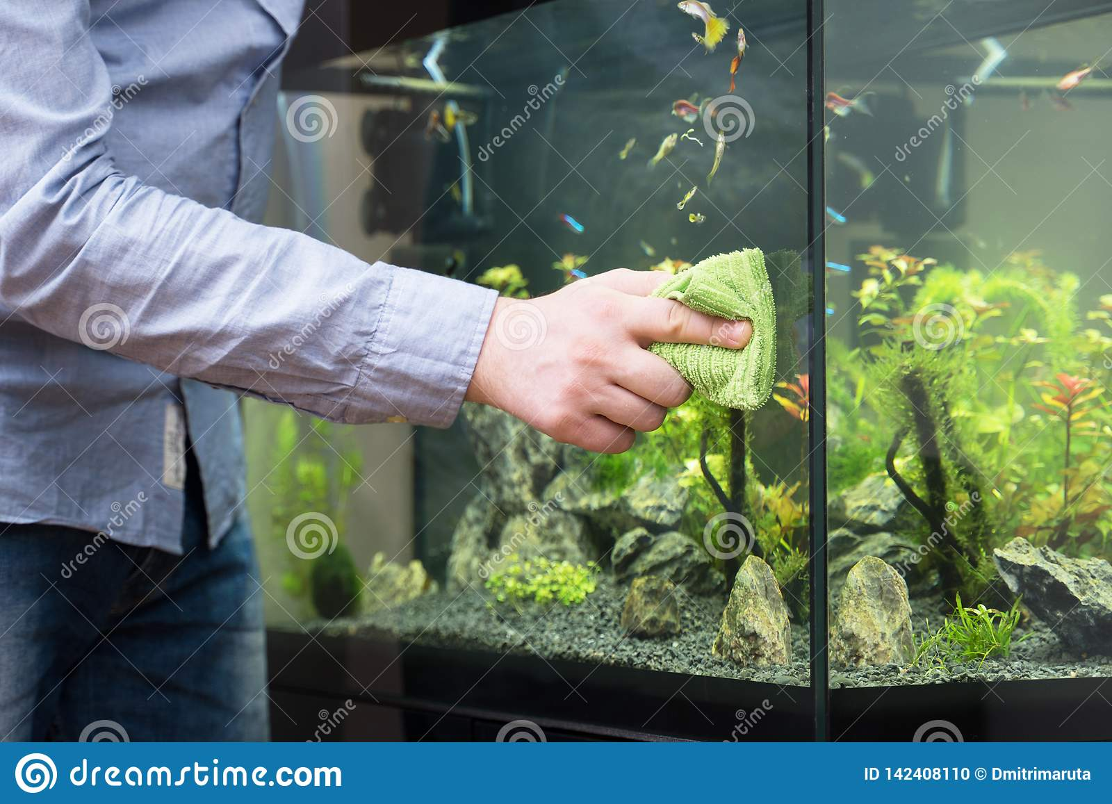Het mannelijke glas van het hand schoonmakende aquarium