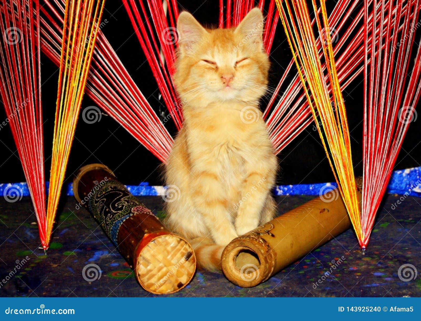 Het mediteren van katje in de zwarte lichte hoek