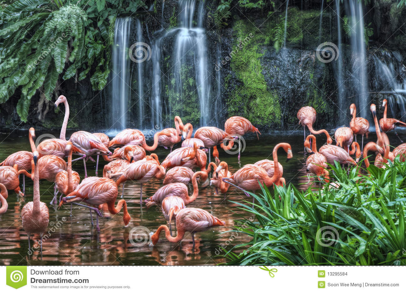 Het Meer van de flamingo bij het Park van de Vogel Jurong