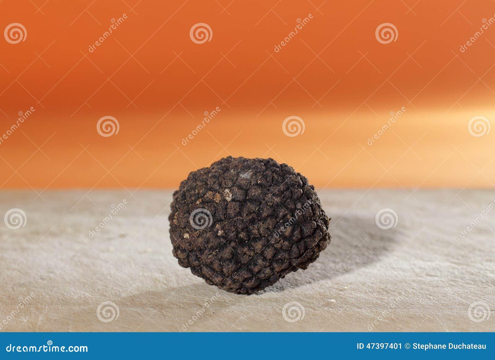 Het meest geparfumeerd van paddestoelen, de Franse zwarte truffel