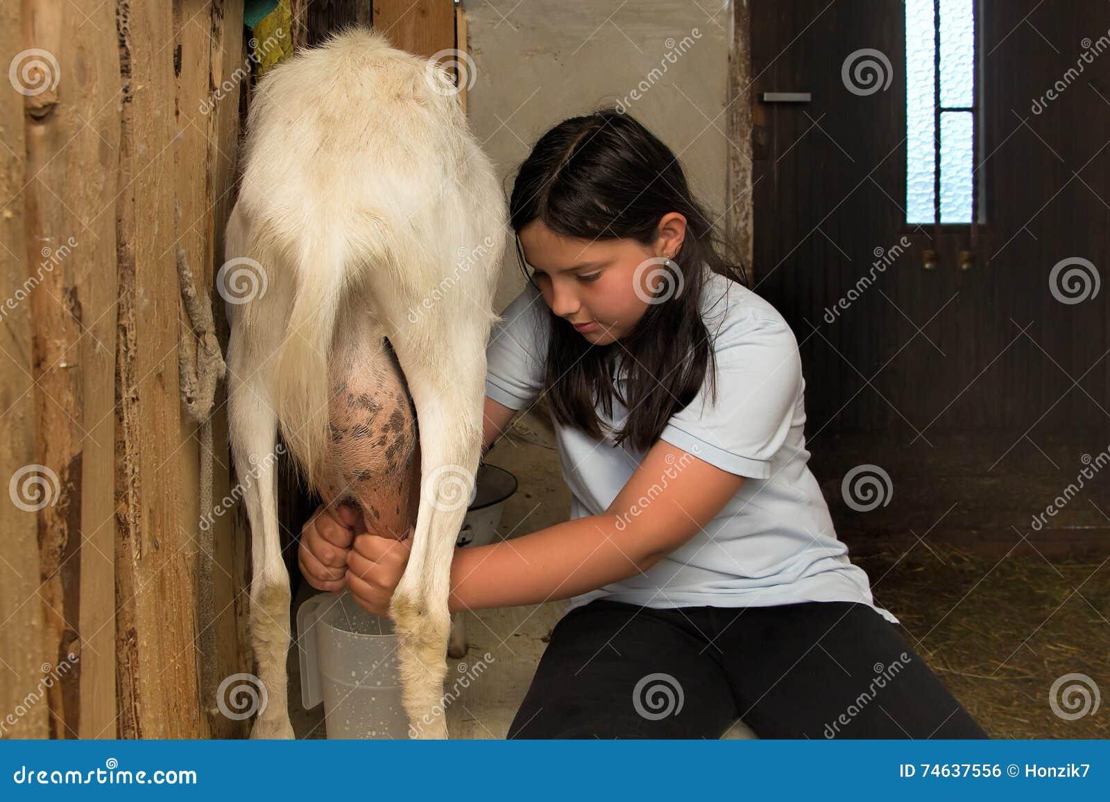 Het melken van een geit