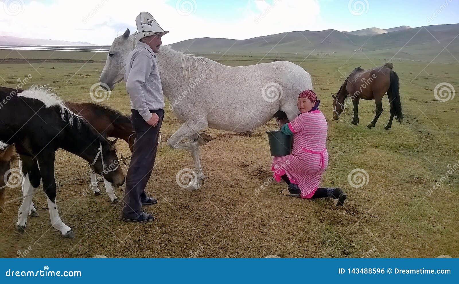 Het melken van een paard in Kyrgyzstan