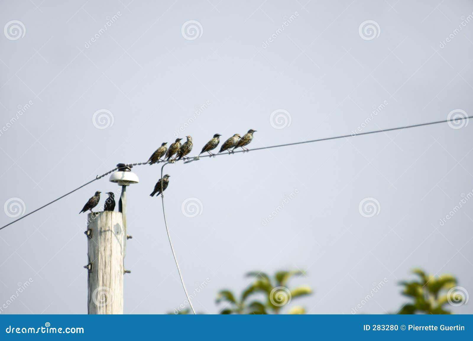 Het migreren van vogels