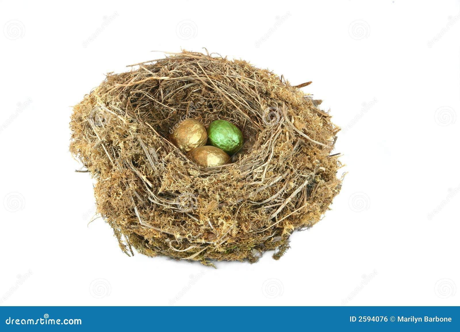 Het milieu Ei van het Nest