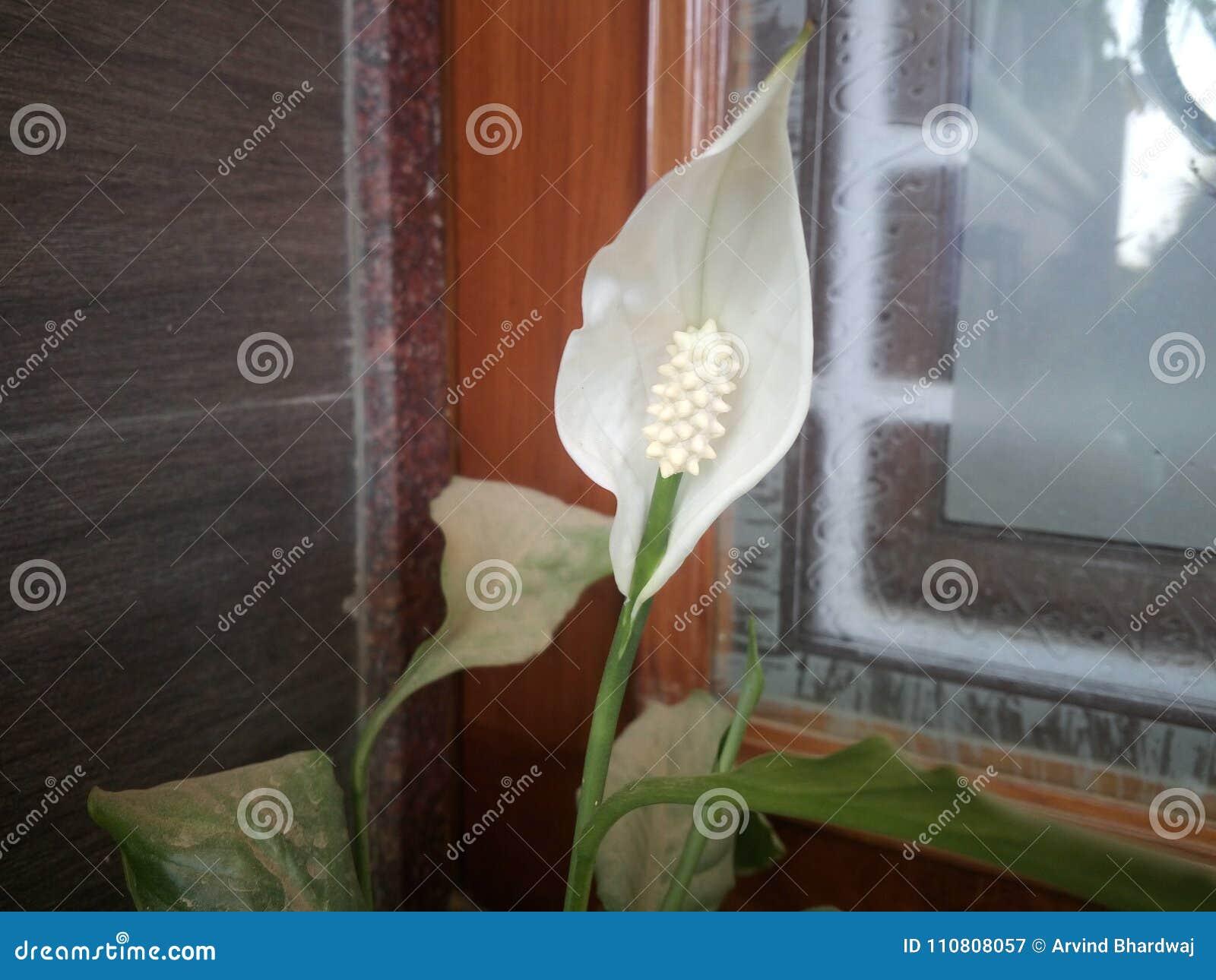Het mooie bloemen toenemen