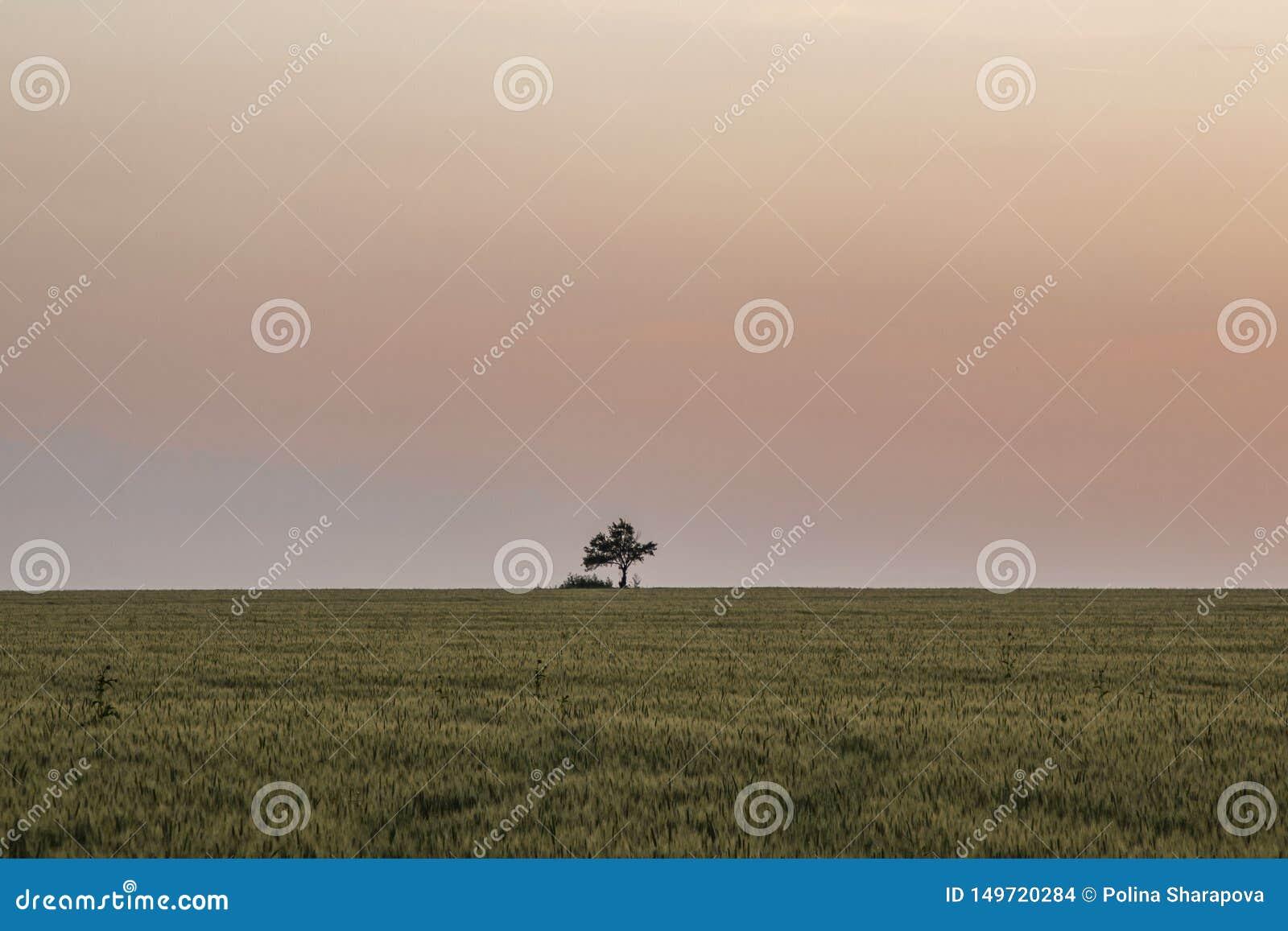 Het mooie landschap, eenzame boom op groen gebied, mooie roze zonsondergang, horizon is zichtbaar clearle