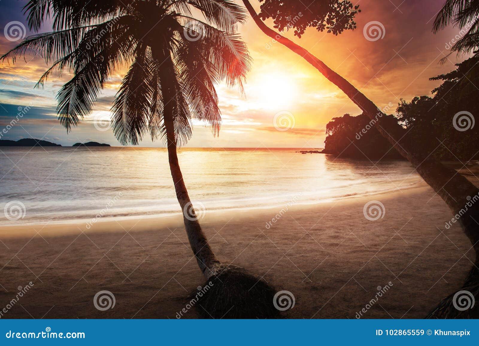 Het mooie op zee strand van de zonsonderganghemel met paar van kokospalm