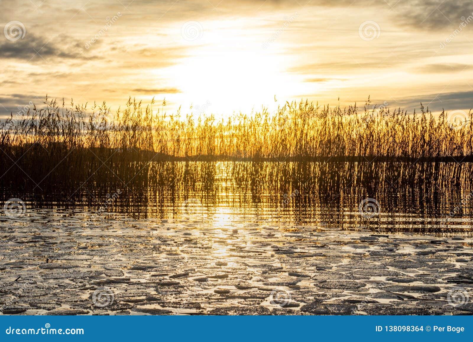 Het mooie oranje landschap van de de winterzonsondergang over kalm meerwater met ijsijsschol, helder zon en riet tegen overzeese