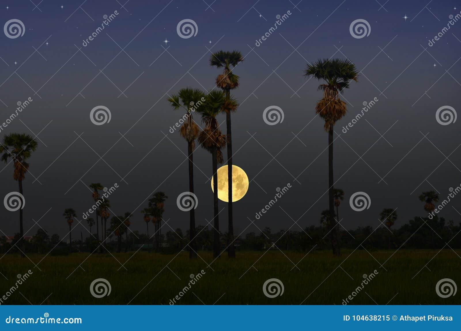 Download Het Mooie Platteland Van Thailand In De Avondzomer Stock Afbeelding - Afbeelding bestaande uit groot, avond: 104638215