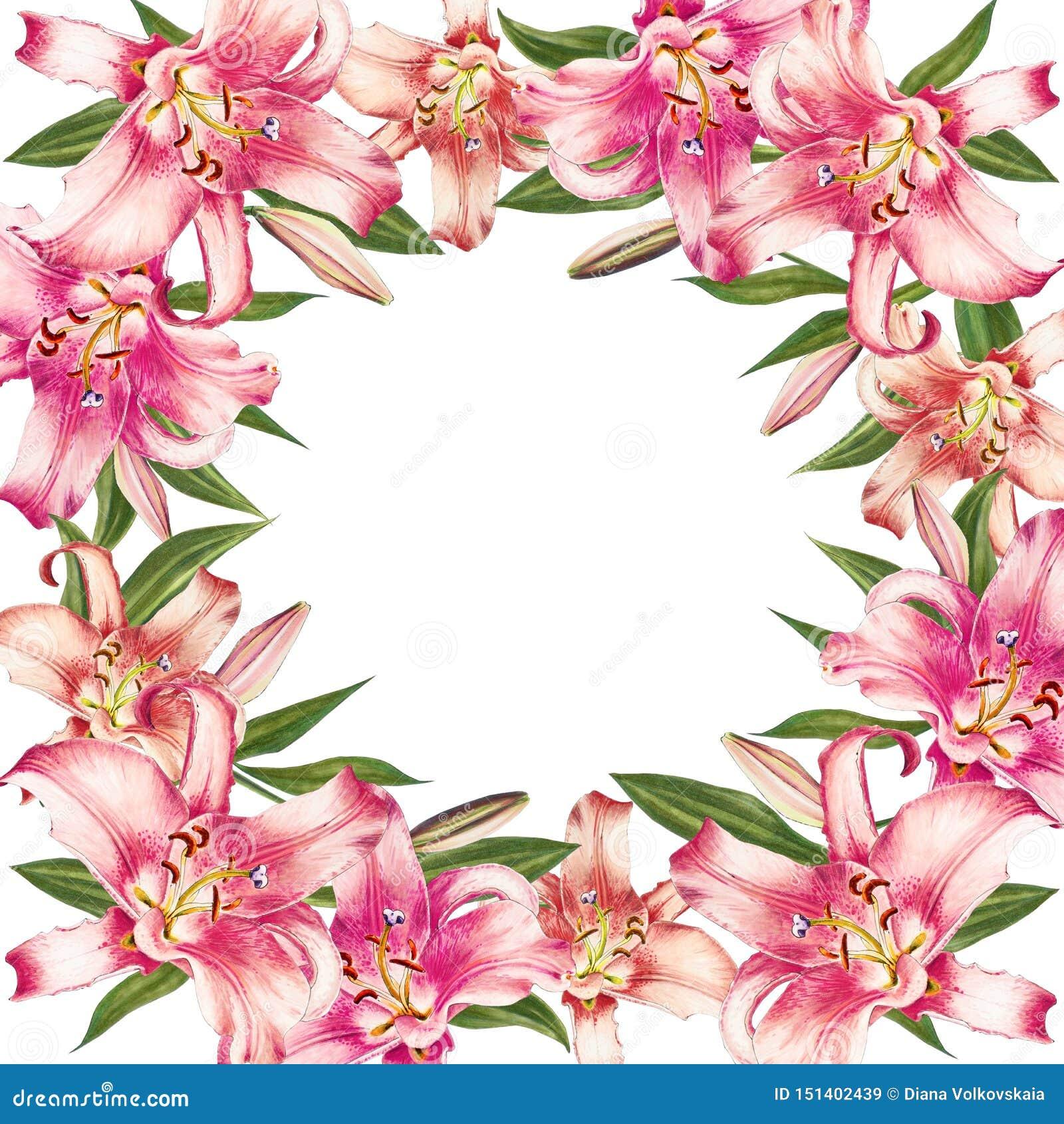 Het mooie roze kader van de leliegrens Boeket van bloemen Bloemendruk Tellerstekening