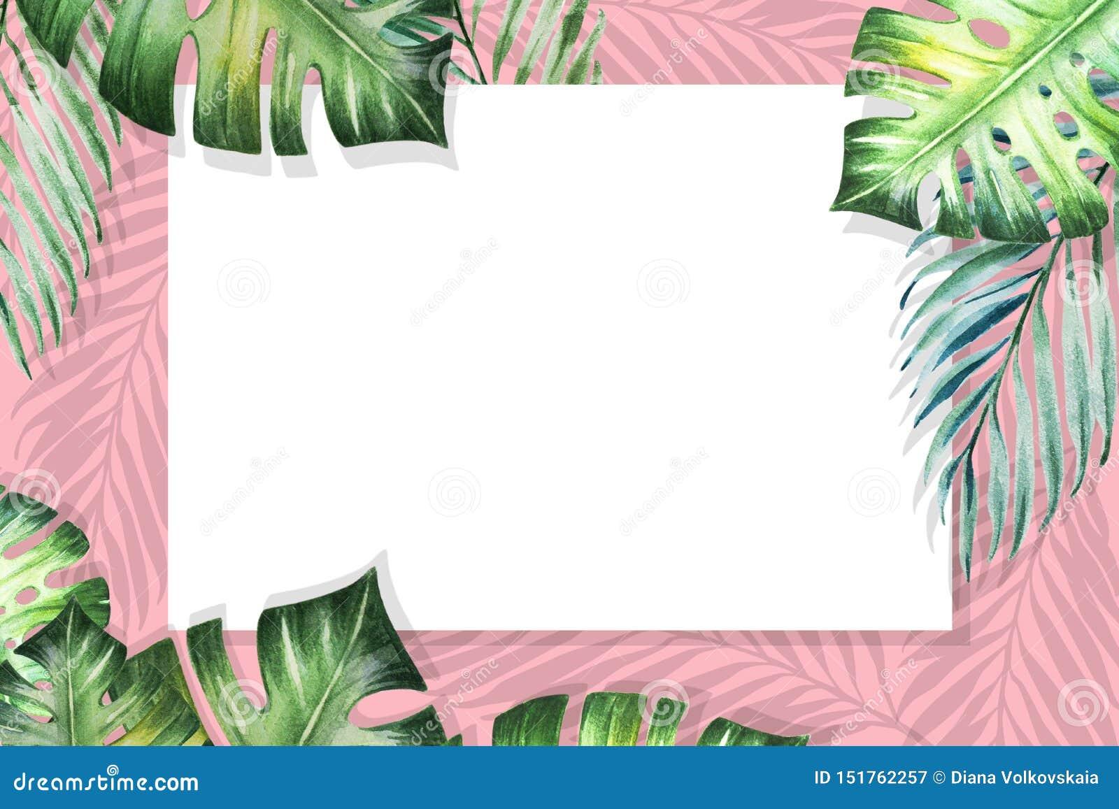 Het mooie tropische kader van de bladerengrens Monstera, palm Het Schilderen van de waterverf Witboek op roze achtergrond