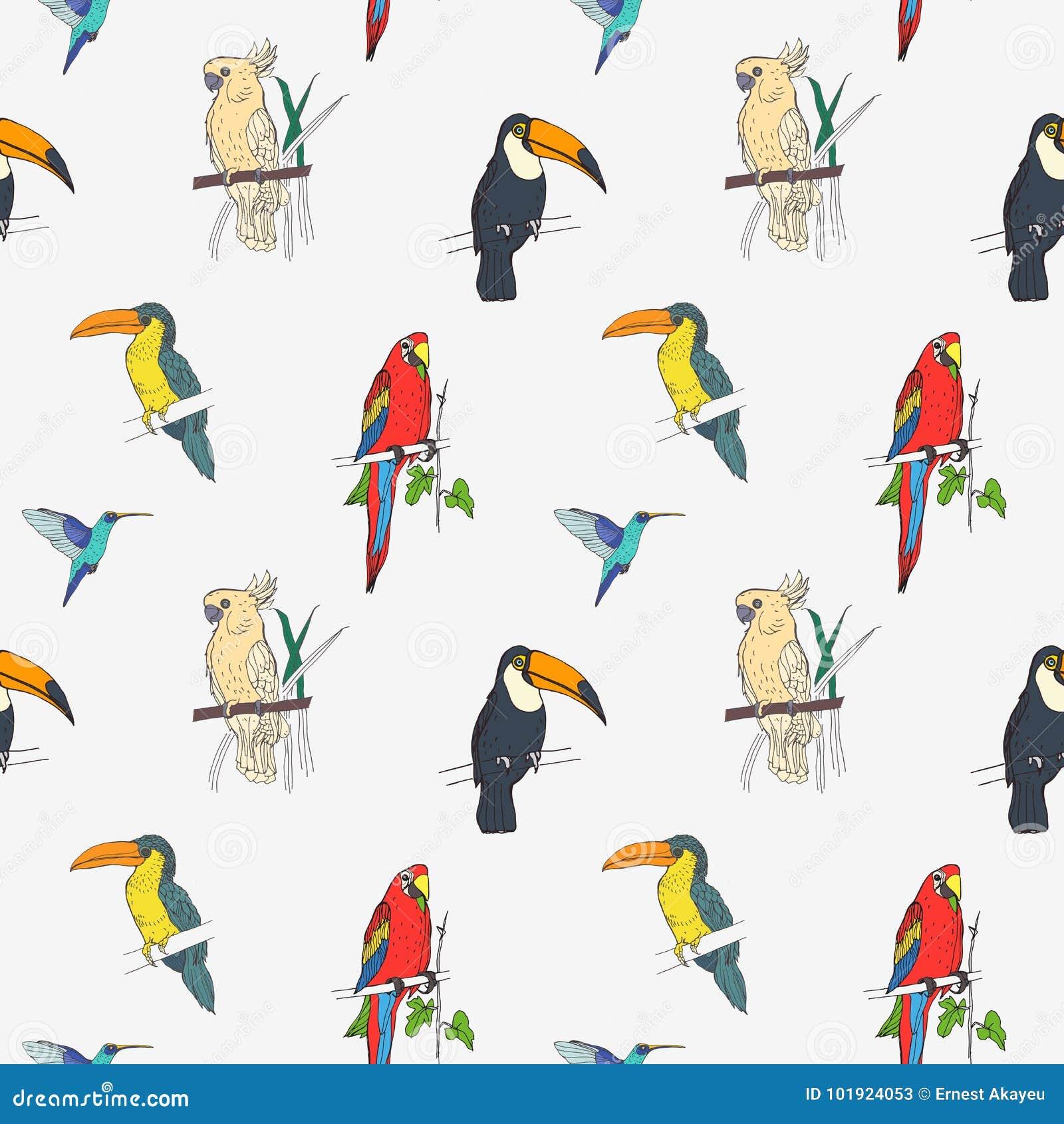 Het mooie tropische naadloze patroon met verschillende exotische vogels die op boom zitten vertakt zich en op witte achtergrond v