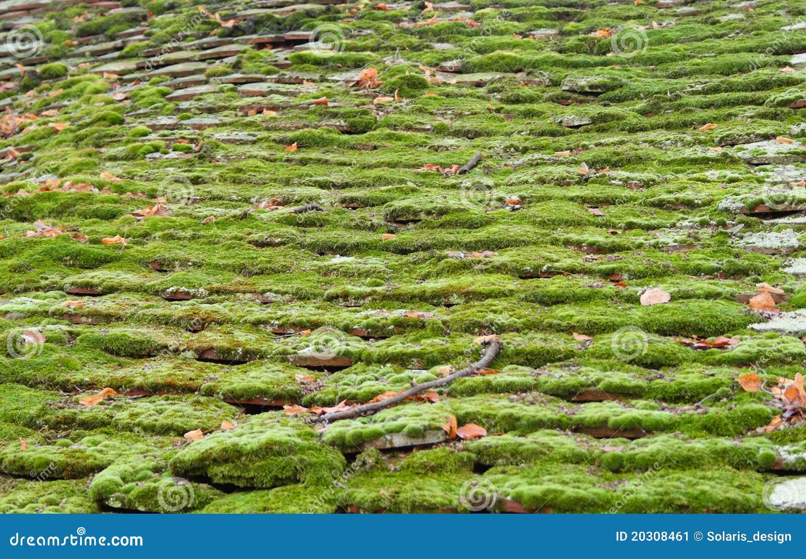 Het mos van het dak stock afbeelding afbeelding bestaande uit schaduw 20308461 - Van schaduw dak ...
