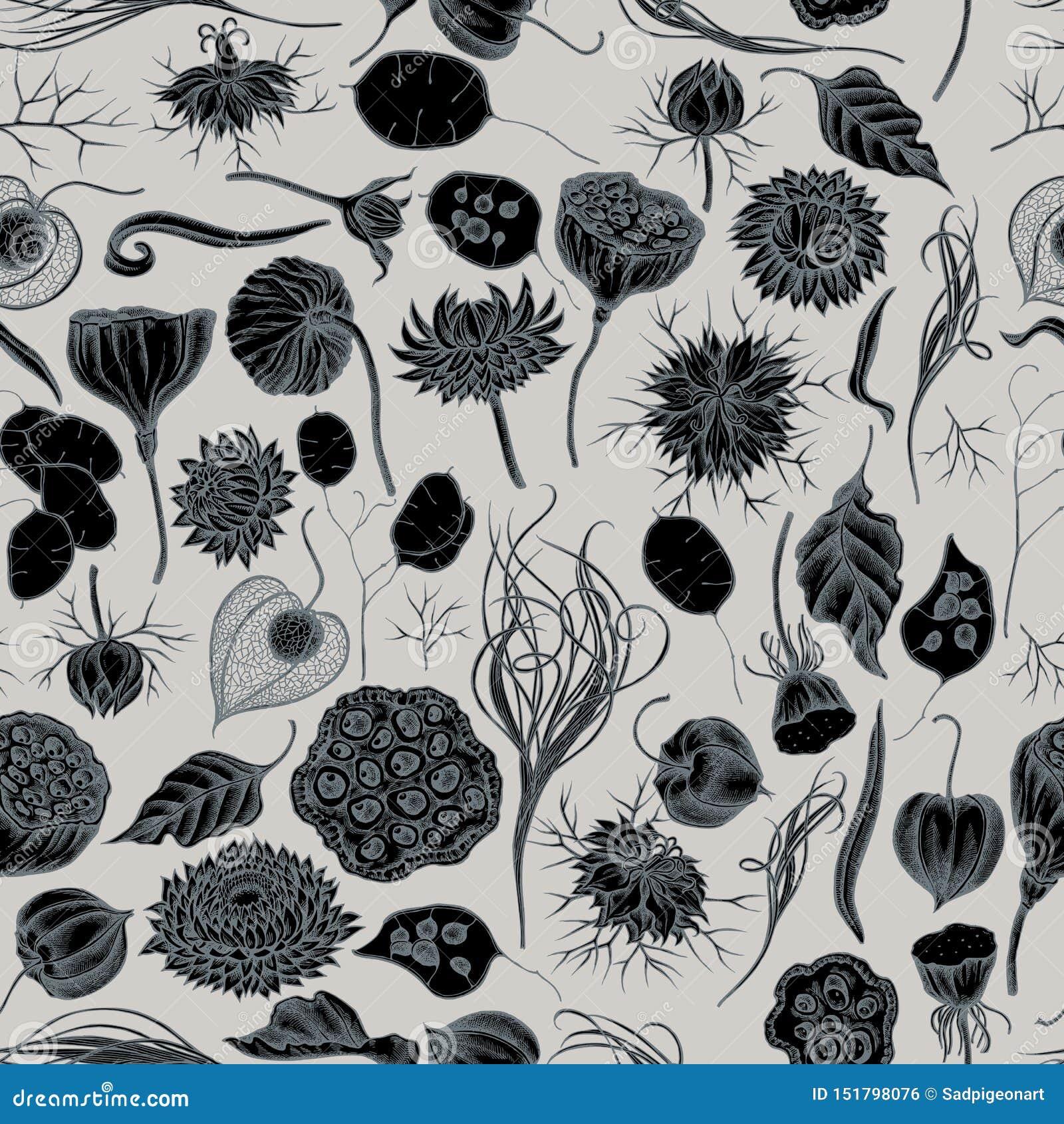 Het naadloze patroon met getrokken hand stileerde zwarte karwij, pluimgras, helichrysum, lotusbloem, lunaria, physalis