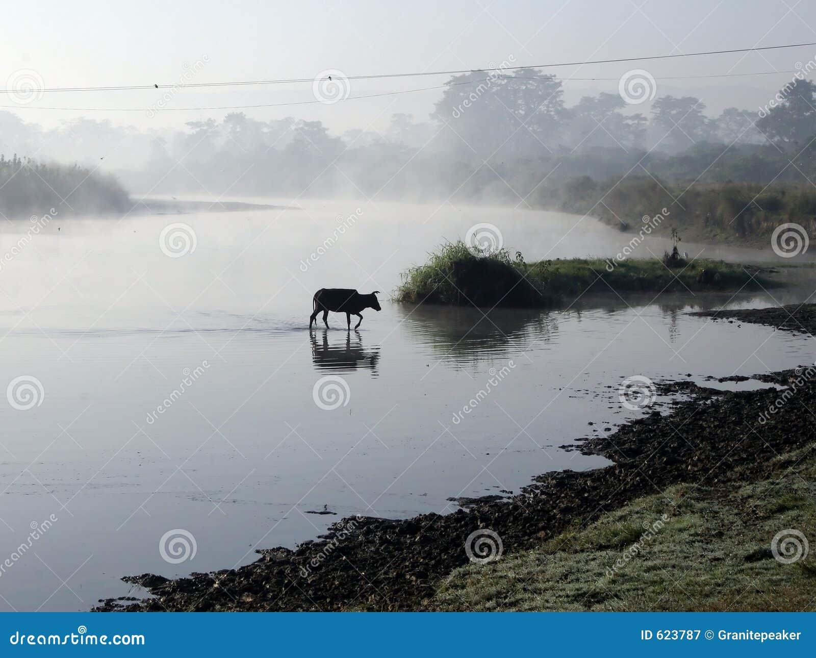 Het Nationale Park van Chitwan
