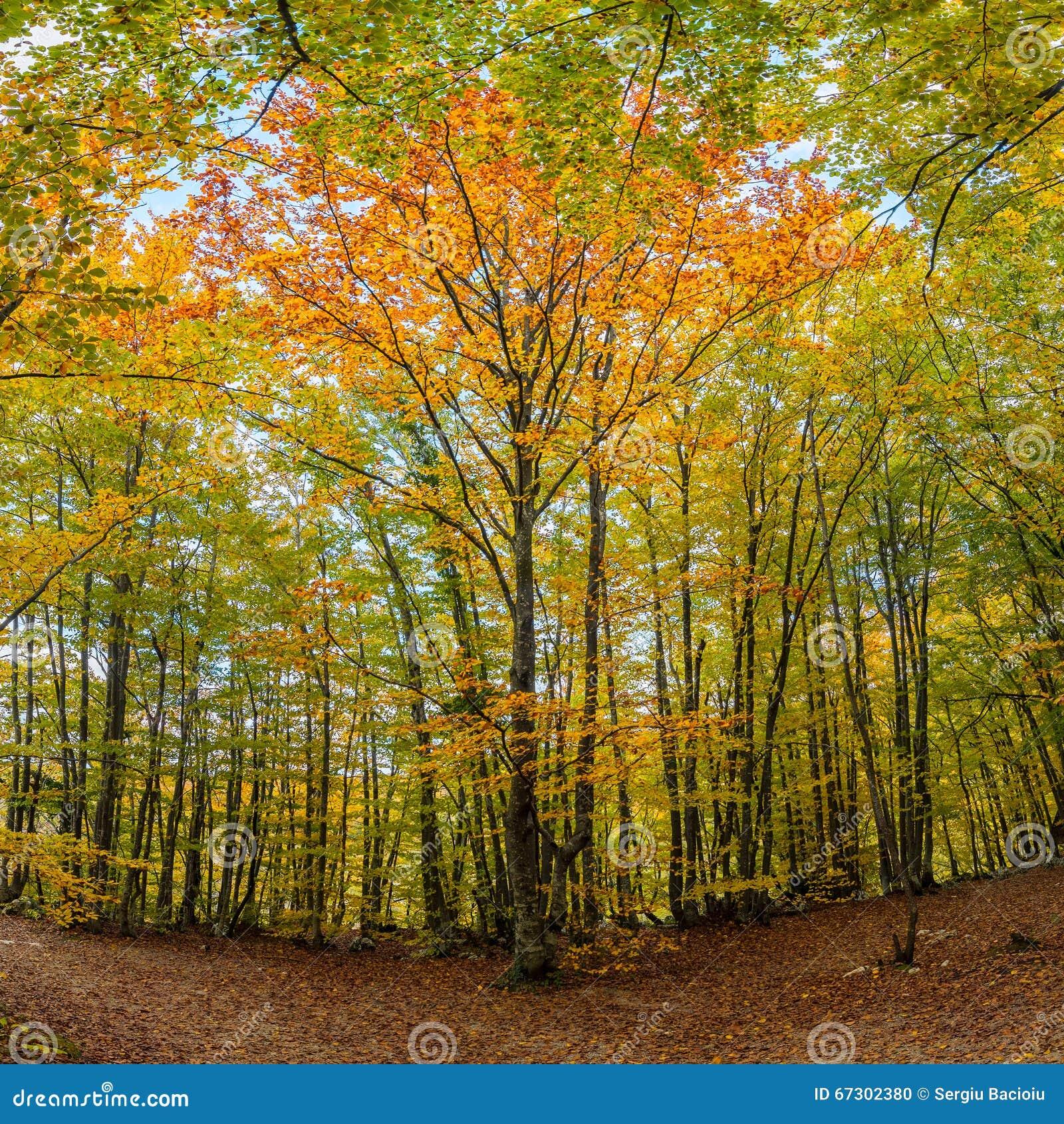 Het Nationale Park van de Meren van Plitvice