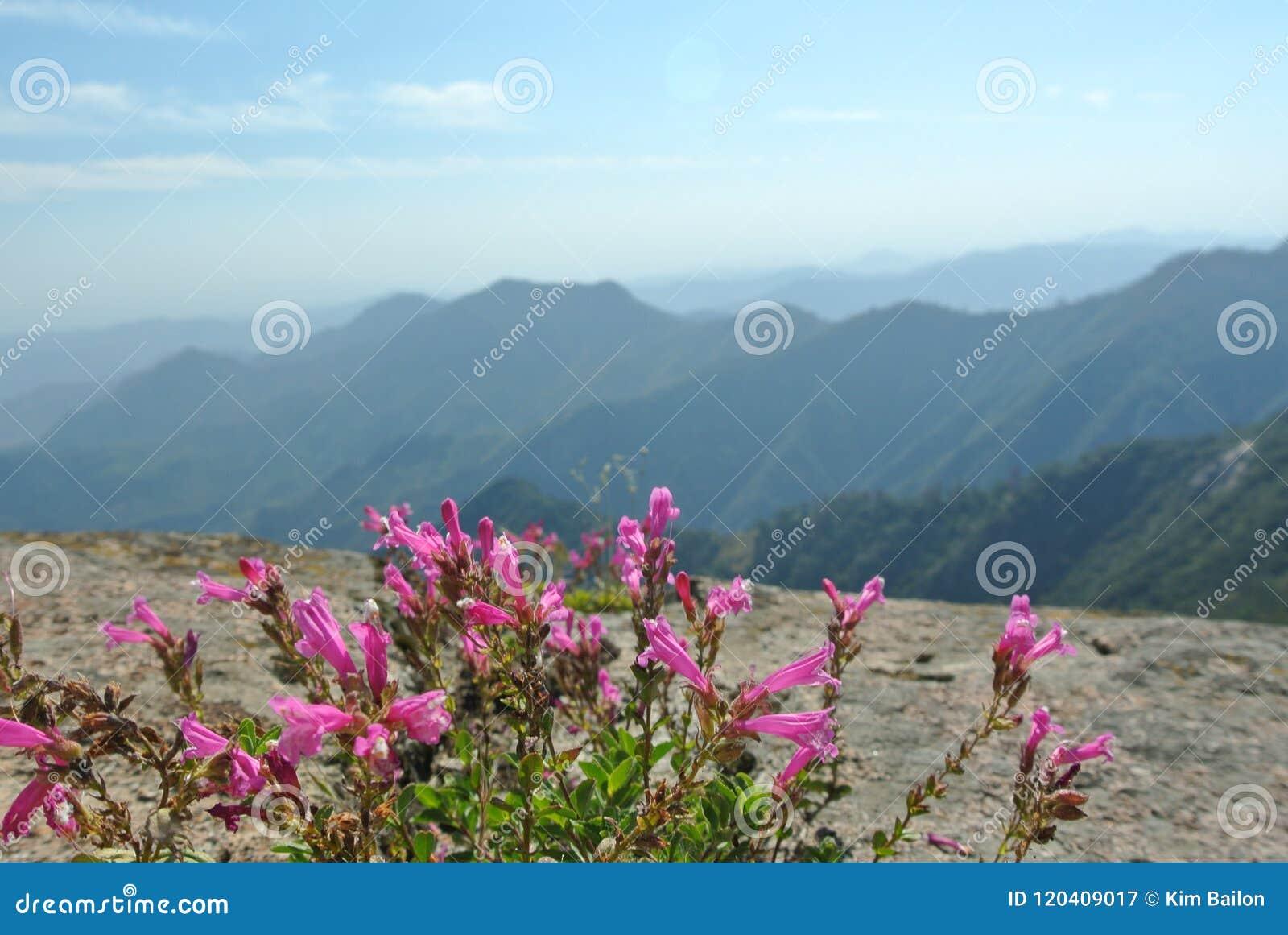 Het Nationale Park van Moro Rock, van de Sequoia en van de Koningencanion, Californië