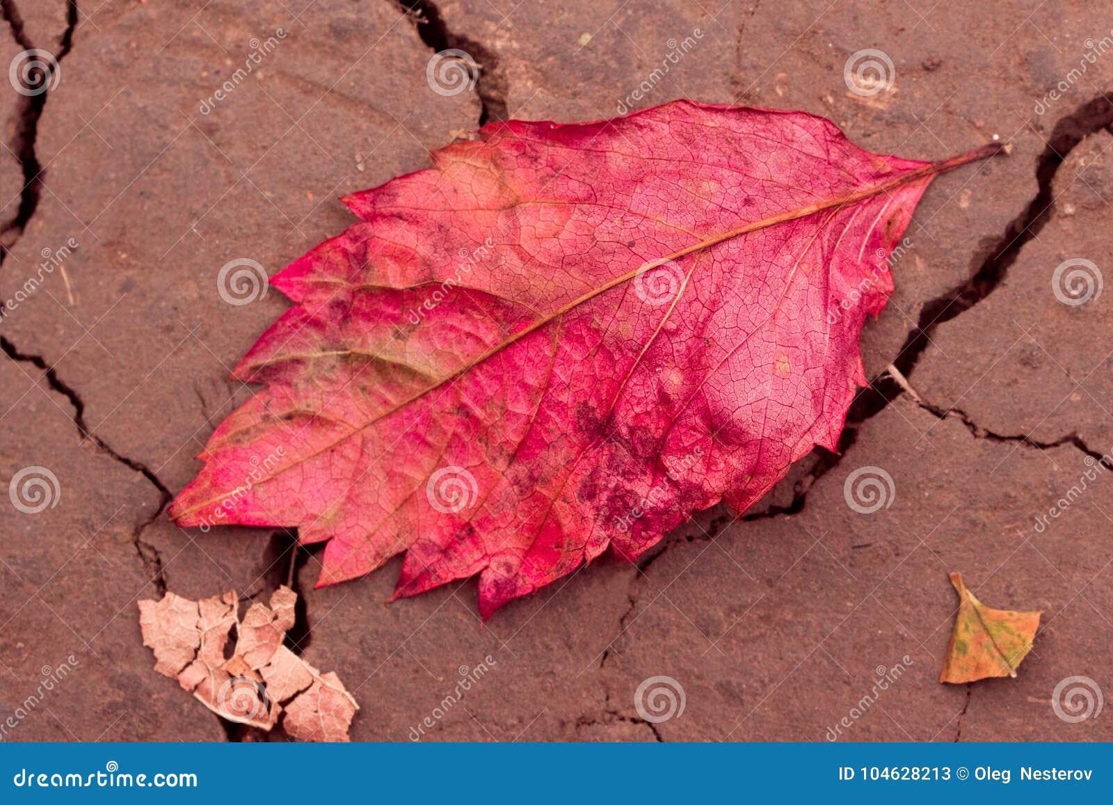Download Het Natuurlijke Achtergrond Heldere Rode De Herfstblad Ligt Op De Grond Stock Afbeelding - Afbeelding bestaande uit blad, nave: 104628213