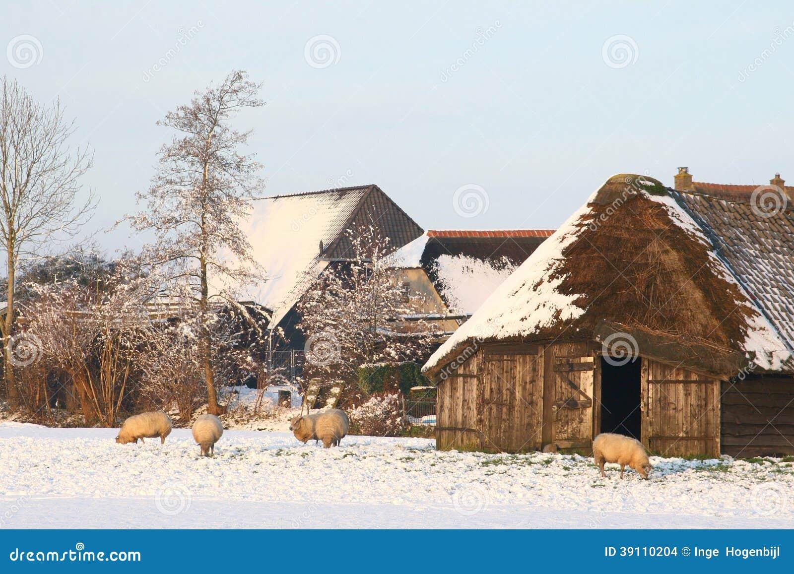 Het Nederlandse landschap van de polder met een sheepfold in de winter