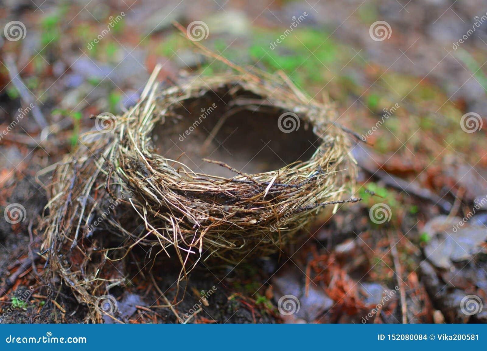 Het nest ligt op graund