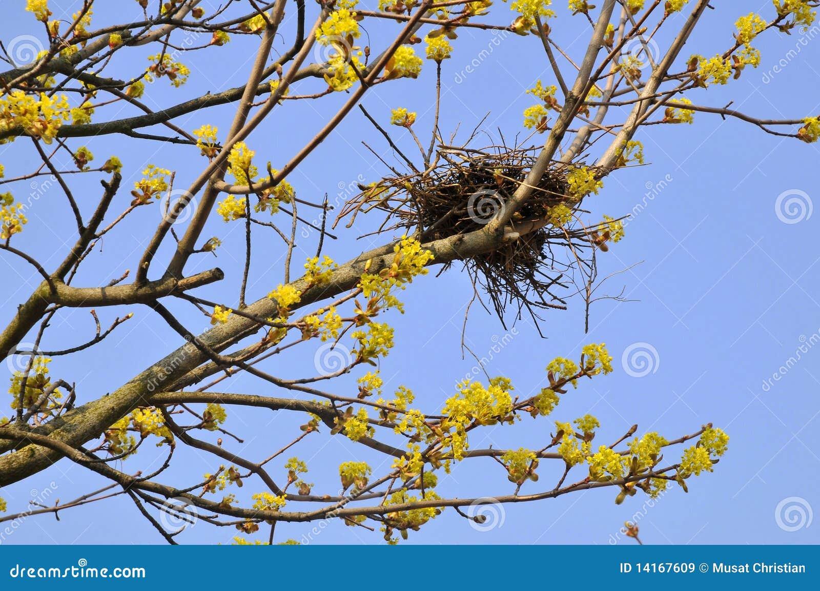 Het nest van de vogel in boom stock afbeelding afbeelding 14167609 - Deksel van de boom ...