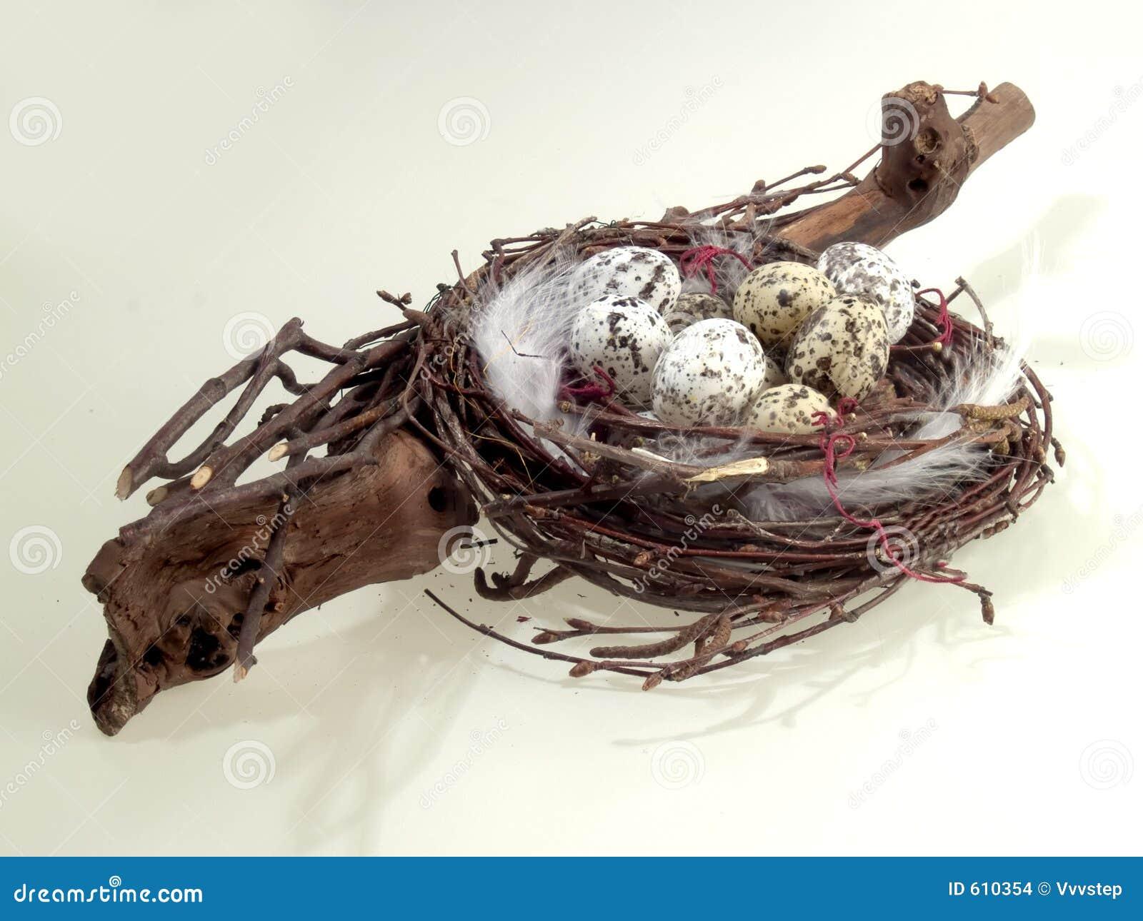 Het nest van de vogel met eieren